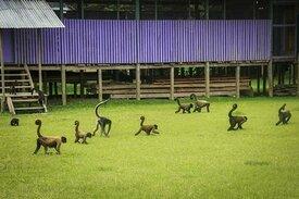 Tour Iquitos/ Isla de los Monos