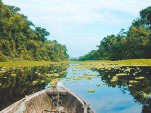 Viajar a la selva: Reserva Nacional Pacaya Samiria